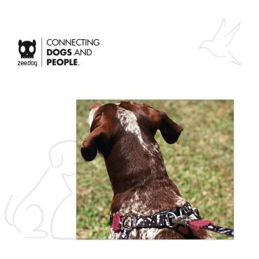 FLASH | DOG HARNESS