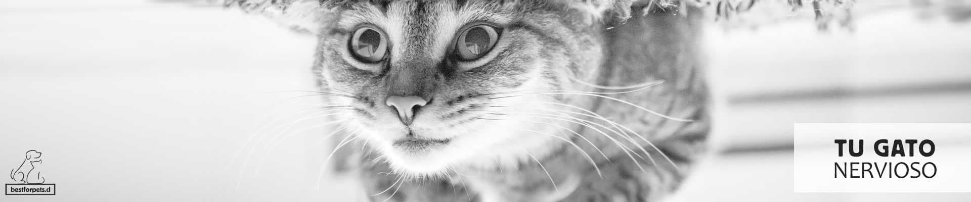 Te ayudamos con tu gato nervioso
