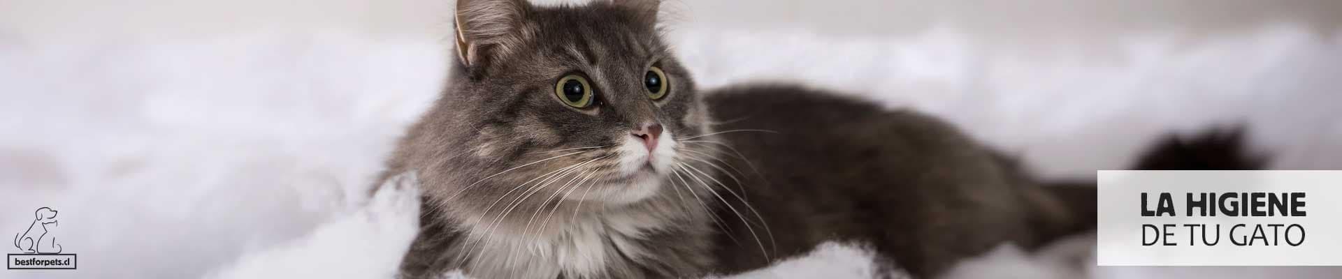 te ayudamos con la higiene de tu gato