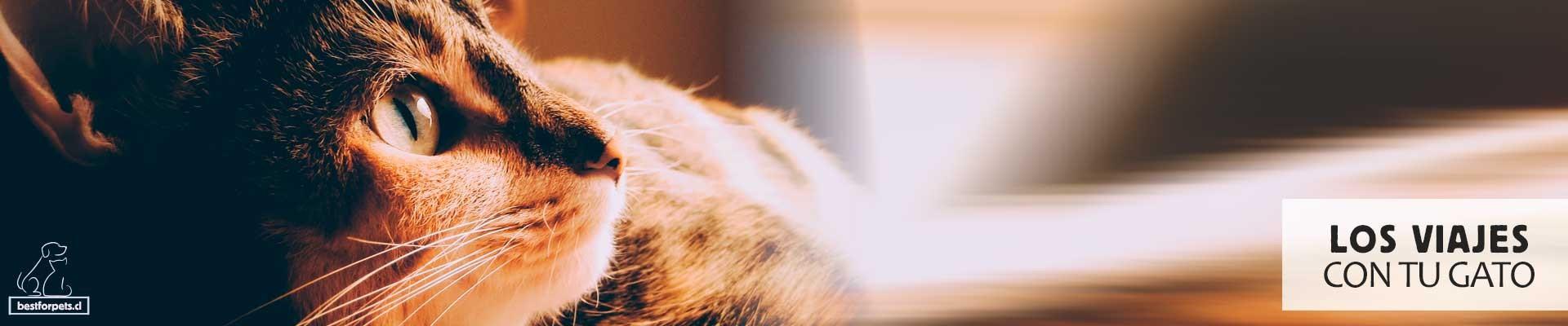 Te ayudamos con los viajes y transporte de tu gato