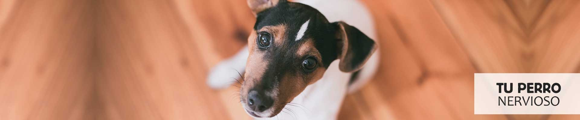 Te ayudamos con tu perro nervioso