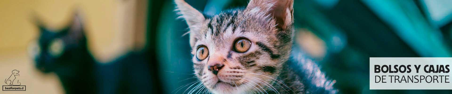 Cajas de transporte para gatos
