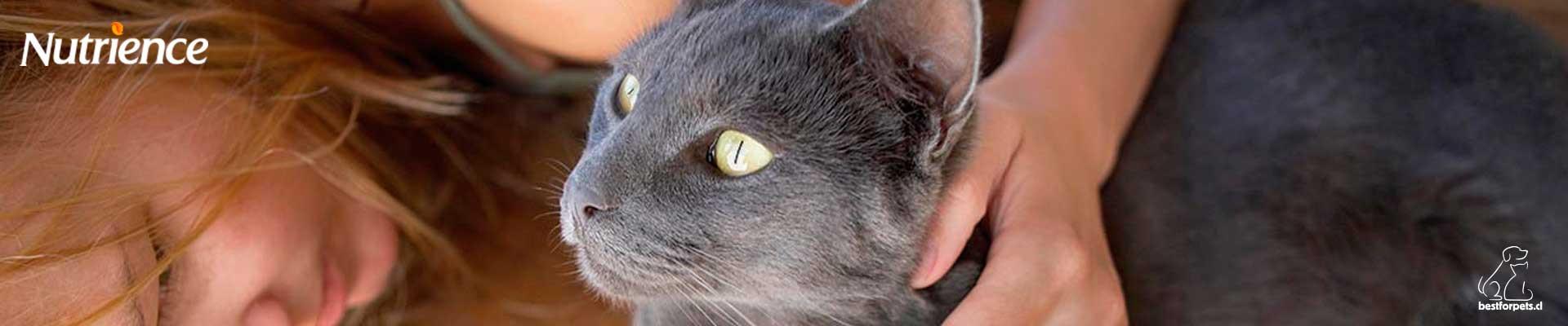 Alimento Nutrience para gatos