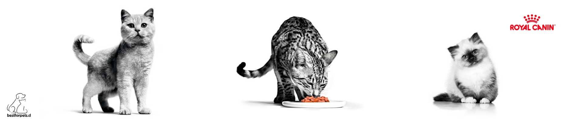 Alimento Royal Canin para gatos