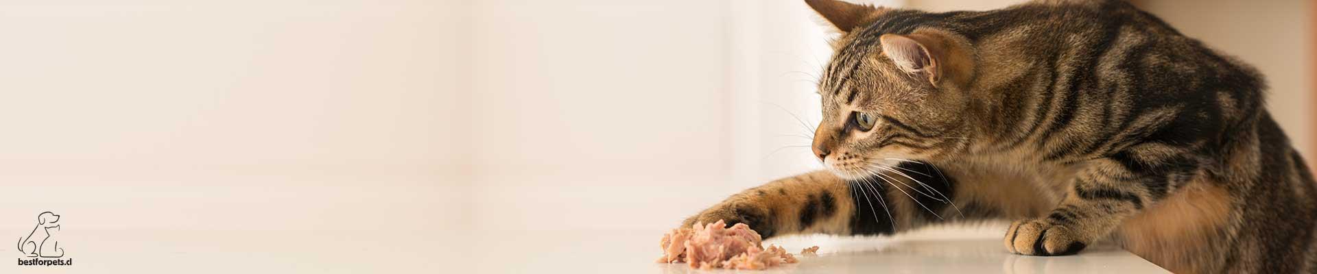 Alimento húmedo para gatos