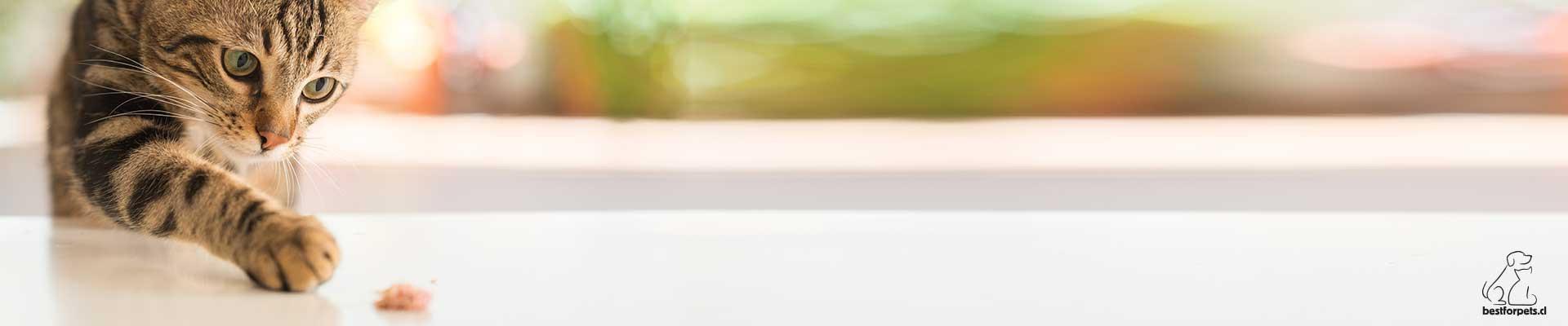 Ver todas las marcas de alimento para gatos