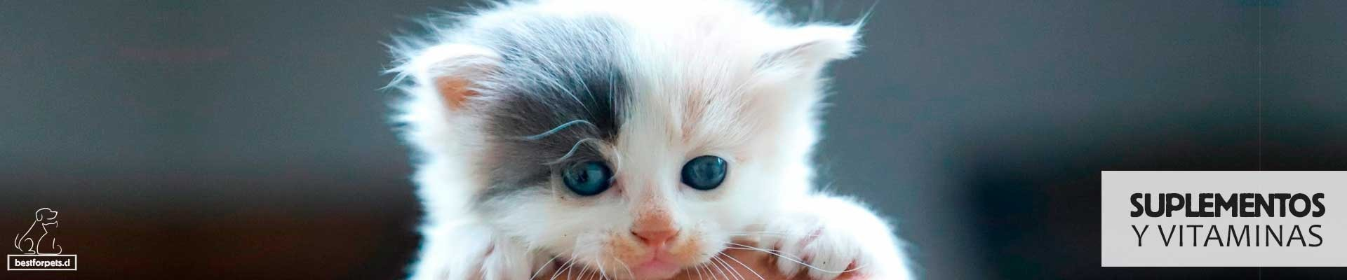 Suplementos y Vitaminas para gatos