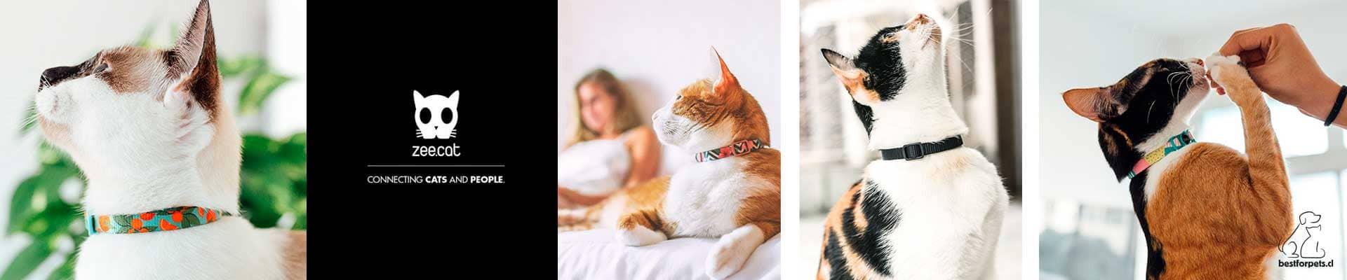 Zee.Cat Collars para gatos