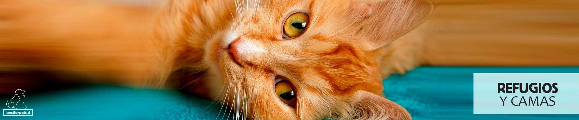 Refugios y Camas para gatos