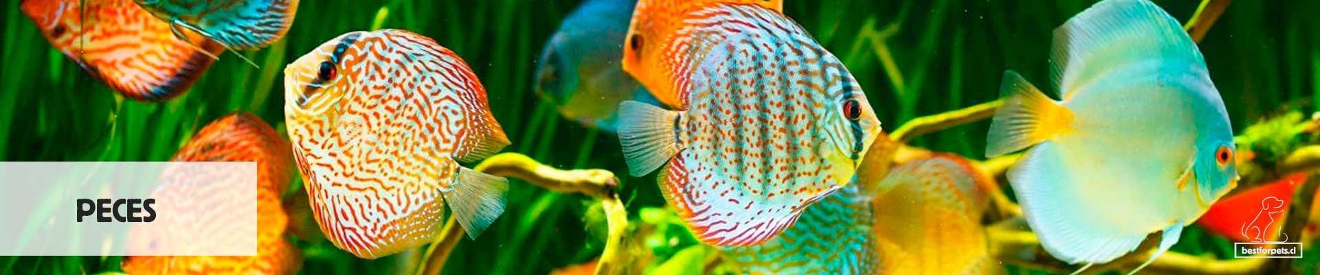 Alimentos y accesorios para peces