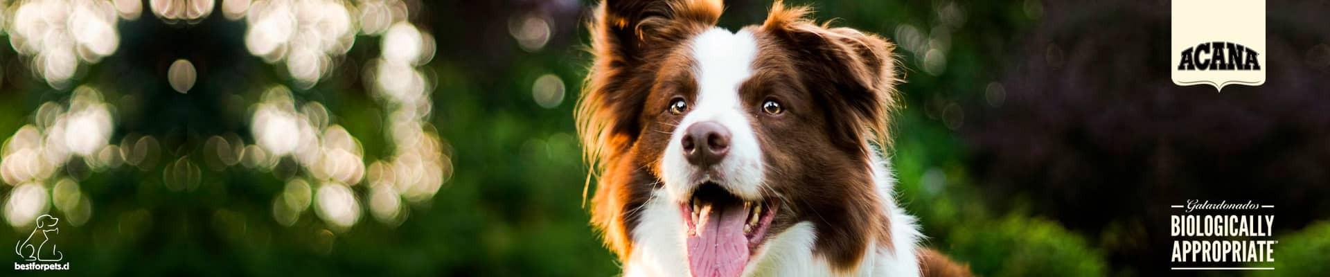 Alimentos Acana para perros