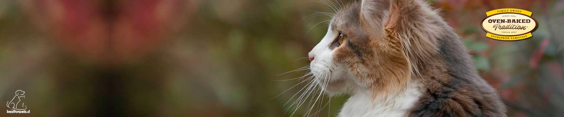 Alimento OVEN-BAKED para gatos