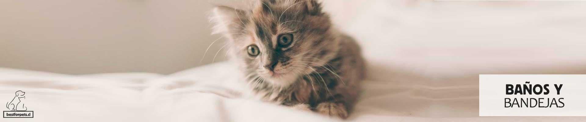 Baños y Bandejas Sanitarias para gatos