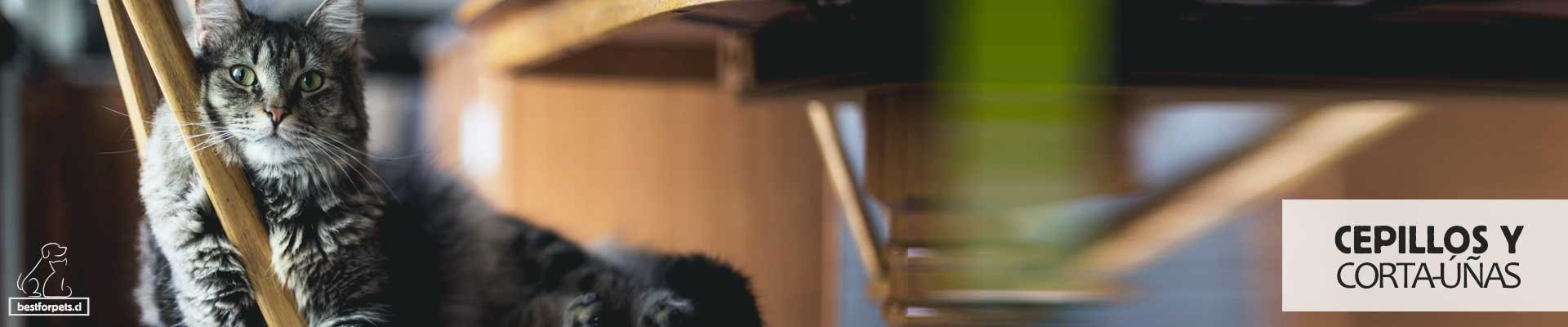 Cepillos y Cortaúñas para gatos